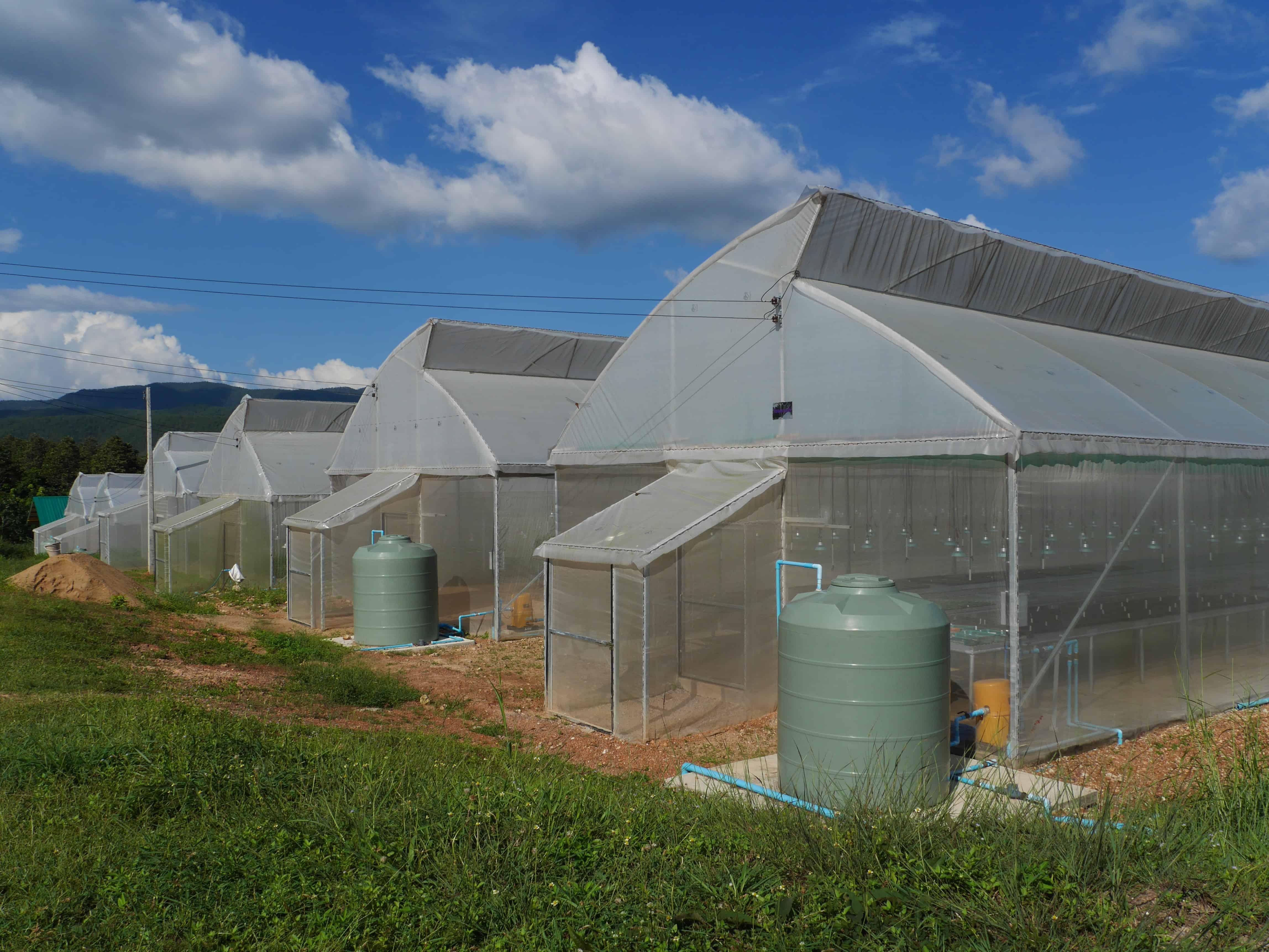 Maejo University – Vegetable, Thailand