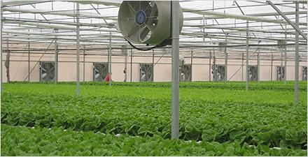 1. Adirom - Greenhouse