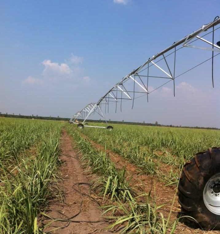 Thanh Long – Sugarcane, Vietnam