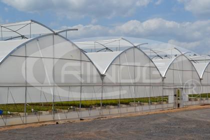 7. Trinog - Greenhouse